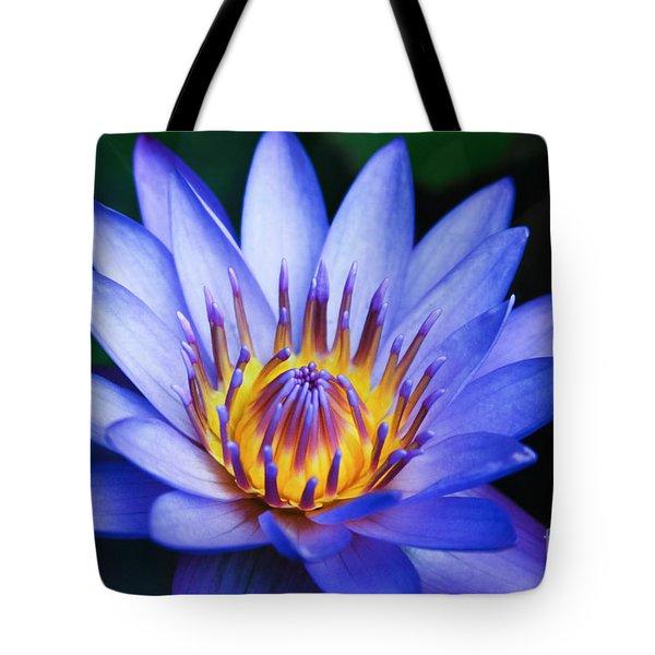 Tropical Dreams Tote Bag by Sharon Mau