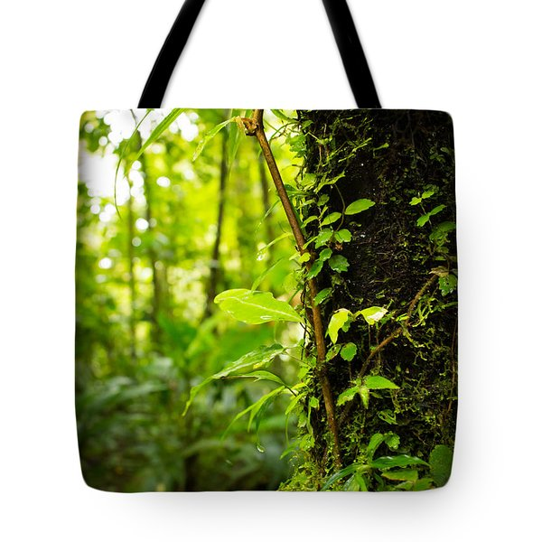 Trunk Of The Jungle Tote Bag
