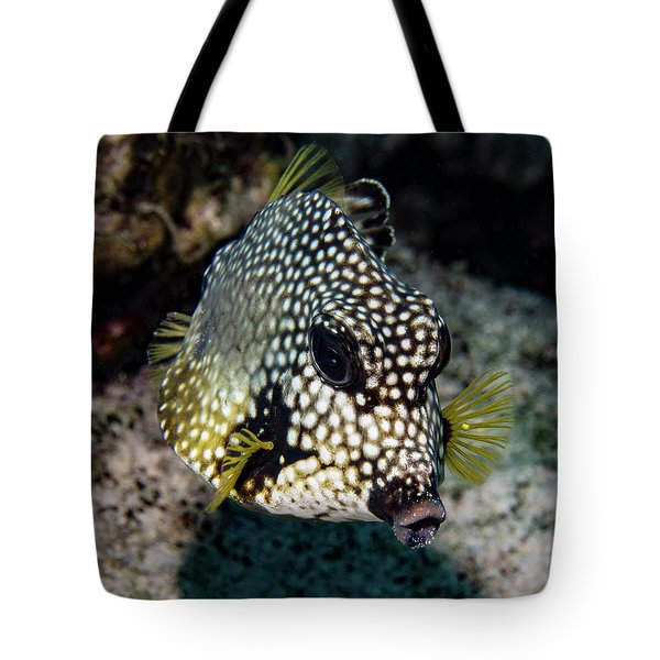 Tote Bag featuring the photograph Trunkfish Portrait by Jean Noren