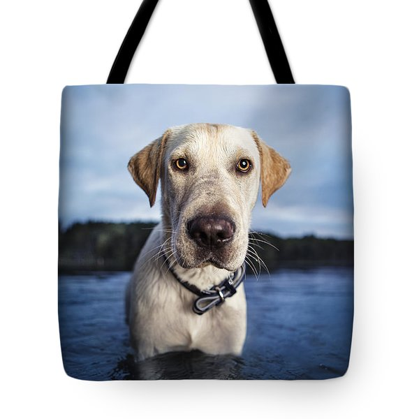 Tote Bag featuring the photograph Tucker by Leslie Leda