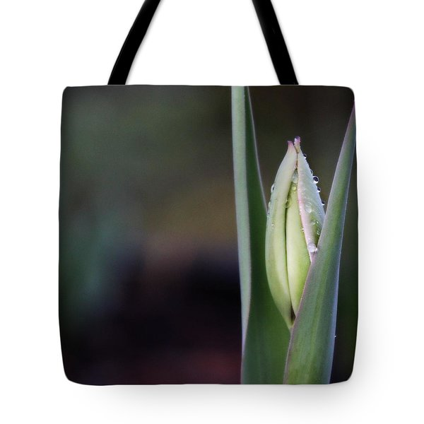 Tulip Bud Tote Bag by Katie Wing Vigil