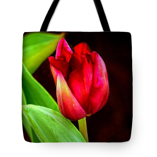 Tulip Caught In The Light Tote Bag