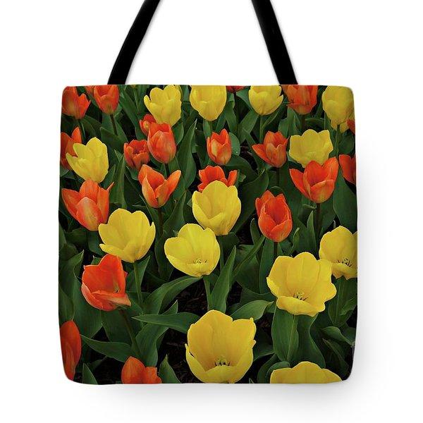 Tulip Chorus Tote Bag