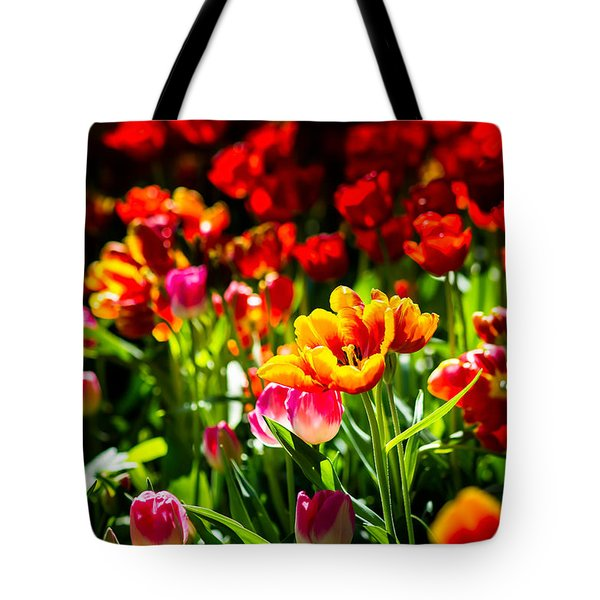 Tote Bag featuring the photograph Tulip Flower Beauty by Alexander Senin