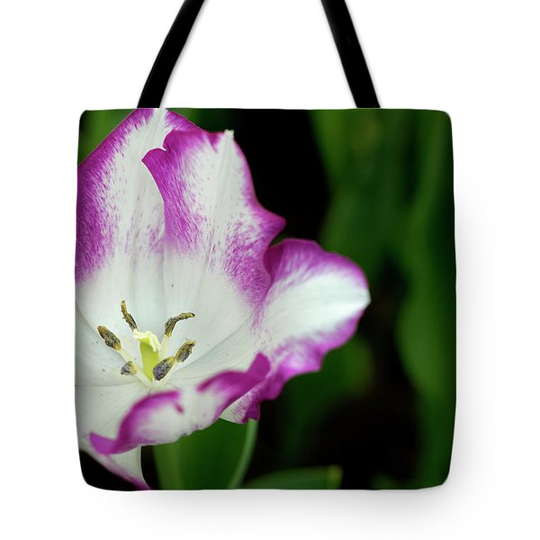 Tote Bag featuring the photograph Tulip Flower by Pradeep Raja Prints