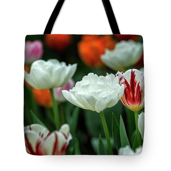 Tote Bag featuring the photograph Tulip Flowers by Pradeep Raja Prints