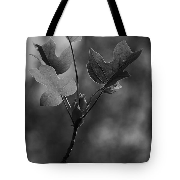 Tulip Tree Leaves In Spring Tote Bag