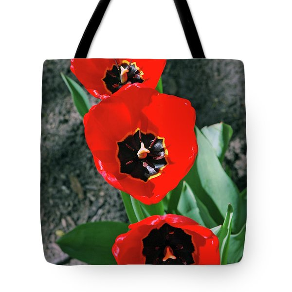 Tote Bag featuring the photograph Tulip Trio by LeeAnn McLaneGoetz McLaneGoetzStudioLLCcom