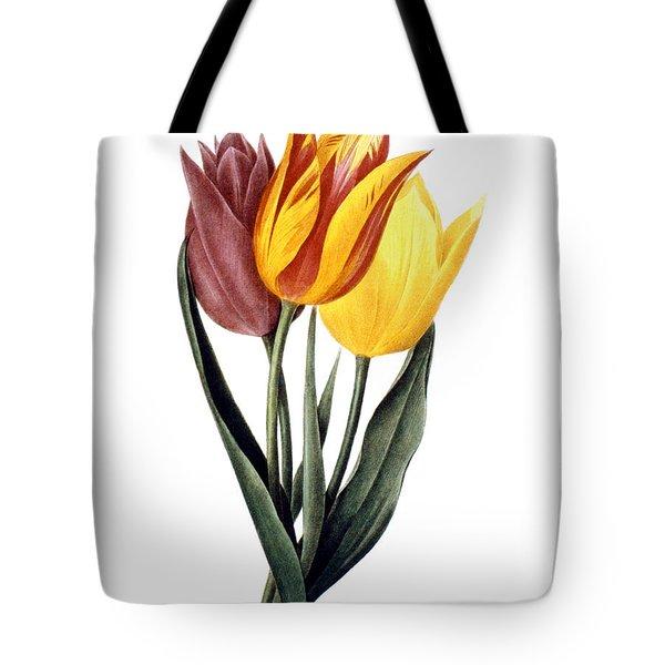 Tulip (tulipa Gesneriana) Tote Bag by Granger
