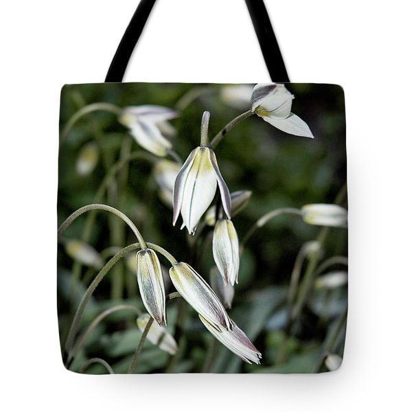 Tulipa Turkestanica Tote Bag