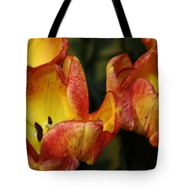 Tulips In The Morning Tote Bag by Bruce Bley