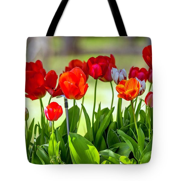 Tote Bag featuring the photograph Tulps by Dennis Bucklin