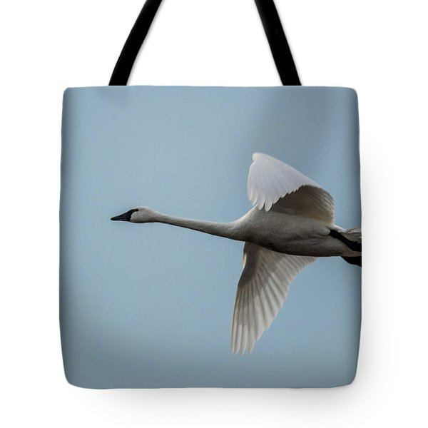 Tundra Swan Cygnus Columbianus, Bombay Hook National Wildlife Refuge, Delaware, 2017 Tote Bag