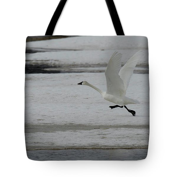 Trumpeter Swan Taking Flight Tote Bag