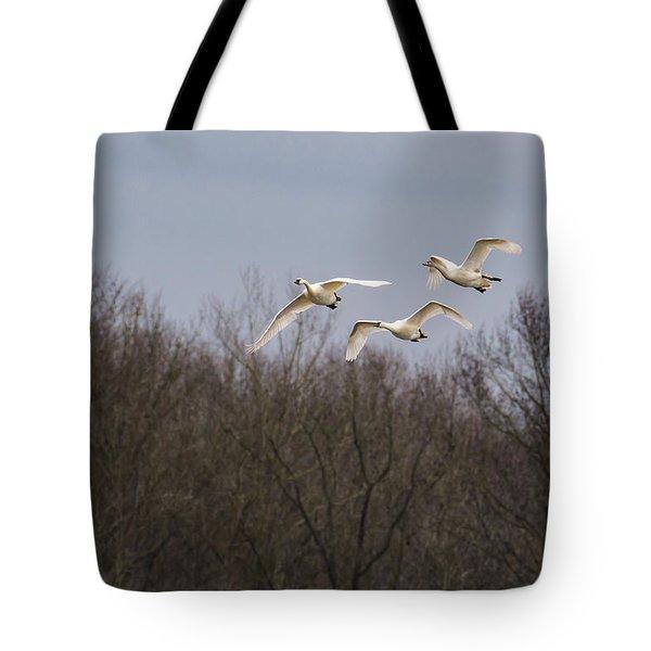 Tundra Swan Trio Tote Bag