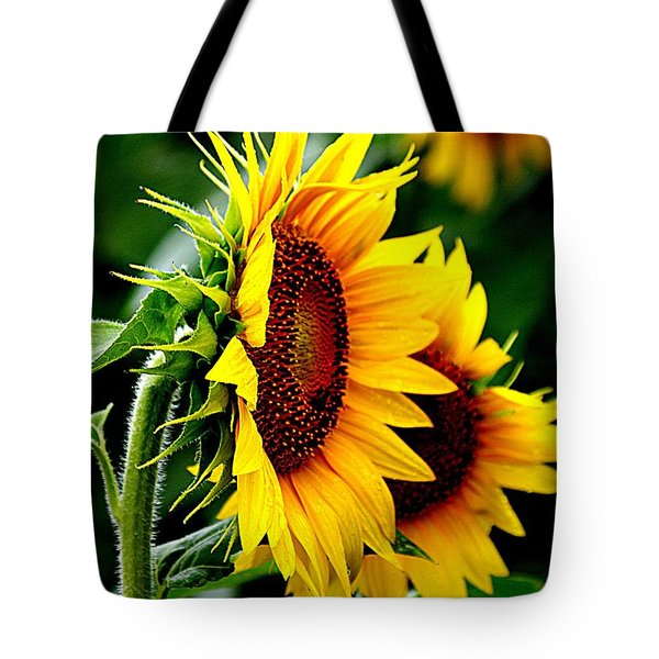 Turn To The Sun For Comfort Tote Bag by Karen McKenzie McAdoo
