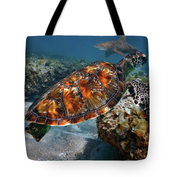 Tote Bag featuring the photograph Turtle And Shark Swimming At Ocean Reef Park On Singer Island Florida by Justin Kelefas