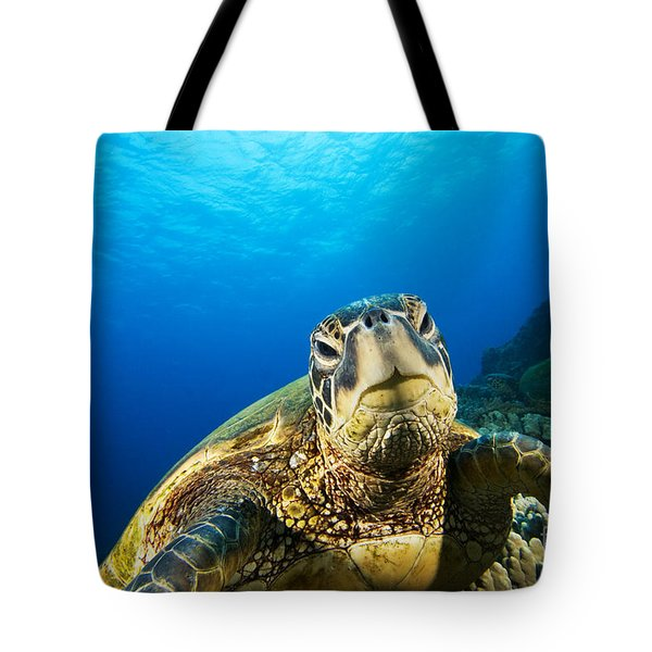 Turtle Stare Tote Bag by Dave Fleetham - Printscapes