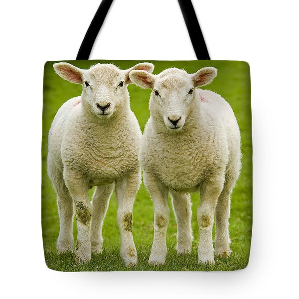 Twin Lambs Tote Bag by Meirion Matthias