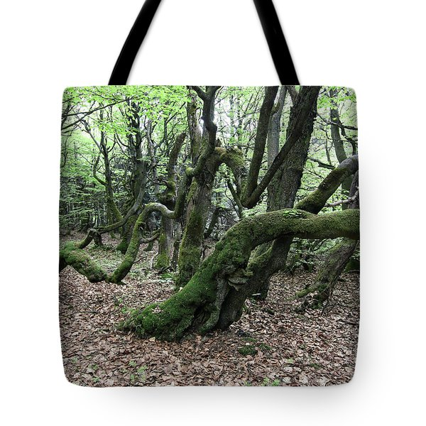 Tote Bag featuring the photograph Twisted Trunks Of Beech Trees - Old Beech Forest by Michal Boubin
