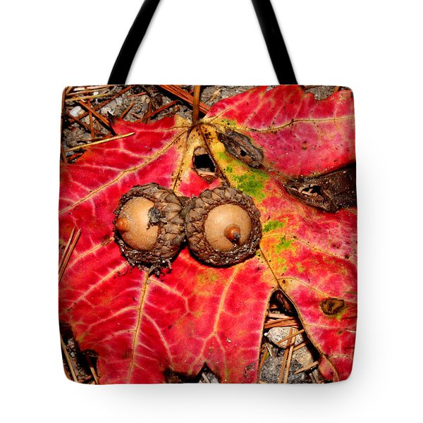 Two Acorns On Tatterd Maple Leaf Tote Bag by Robert Morin