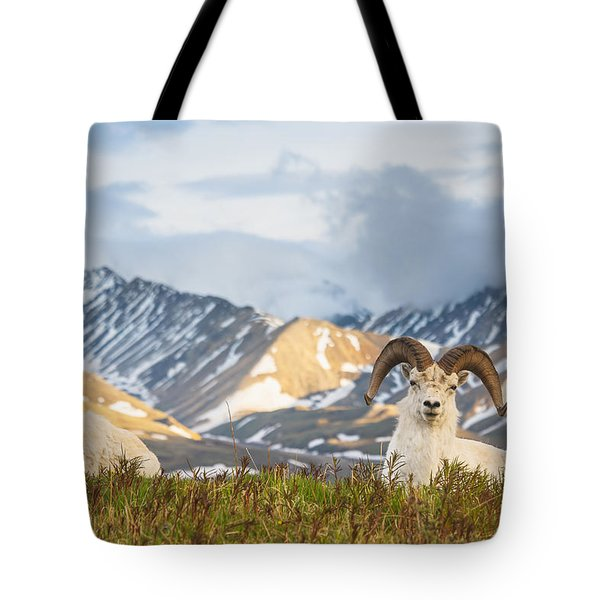 Two Adult Dall Sheep Rams Resting Tote Bag by Michael Jones