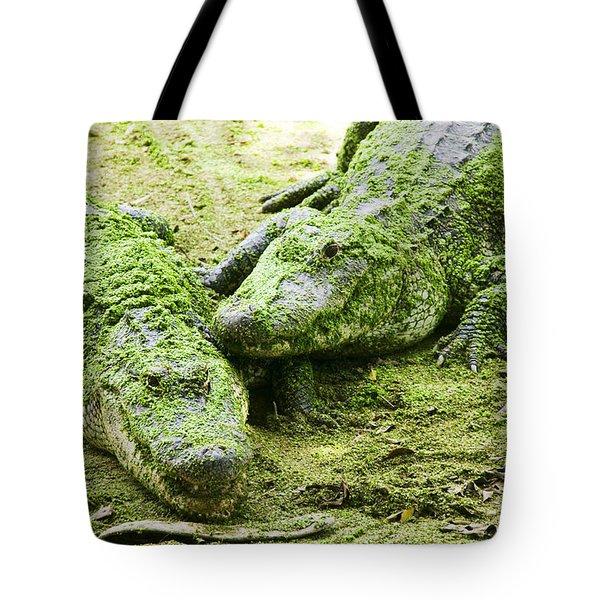 Two Alligators Tote Bag