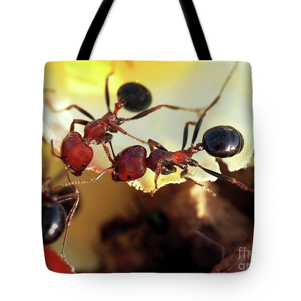 Two Ants In Sunny Day Tote Bag