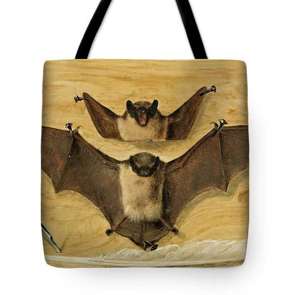 Two Bats Nailed To A Timber Wall, Knife And Quill Pen Tote Bag