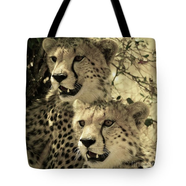Tote Bag featuring the photograph Two Cheetahs by Frank Stallone
