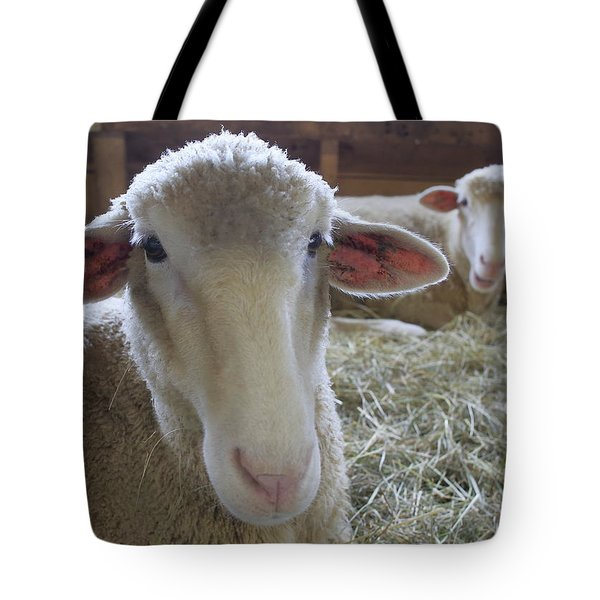 Two Funny Sheep In A Barn Tote Bag