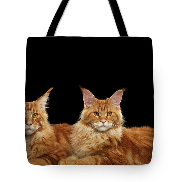Two Ginger Maine Coon Cat On Black Tote Bag