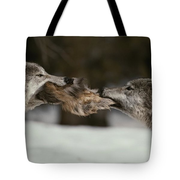 Two Gray Wolves, Canis Lupus, Tussle Tote Bag