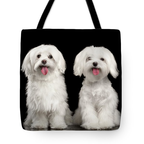 Two Happy White Maltese Dogs Sitting, Looking In Camera Isolated Tote Bag