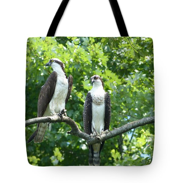 Two On A Limb - Osprey Tote Bag by Donald C Morgan