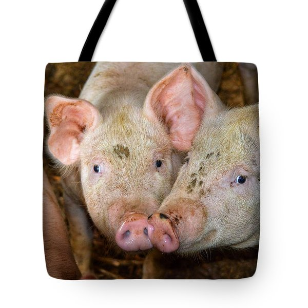 Two Pigs Tote Bag