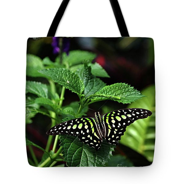 Two Tailed Jay Butterflies- Graphium Agamemnon Tote Bag