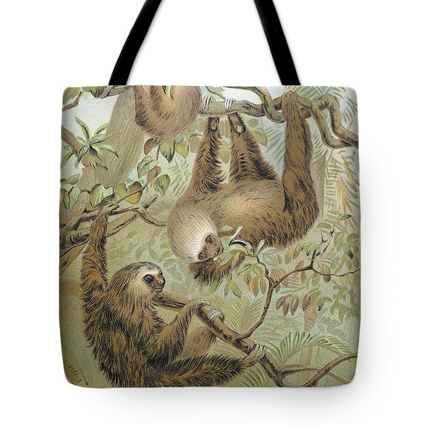 Two-toed Sloth Tote Bag by Granger