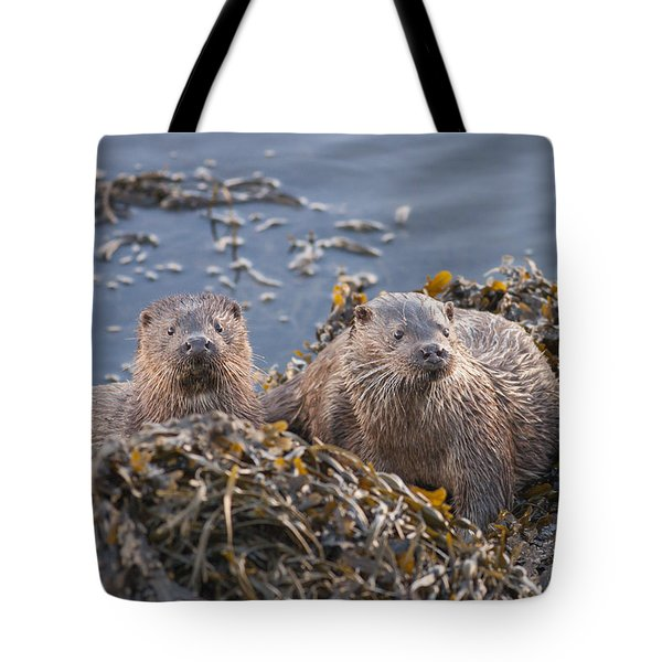 Two Young European Otters Tote Bag