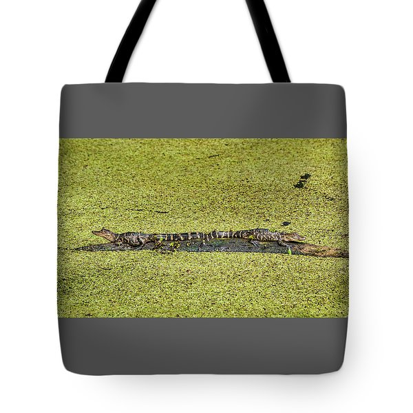 Tote Bag featuring the photograph Two Young Gators by Steven Sparks
