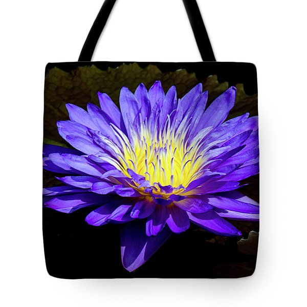 Tote Bag featuring the photograph Ultra Violet Tropical Waterlily by Julie Palencia
