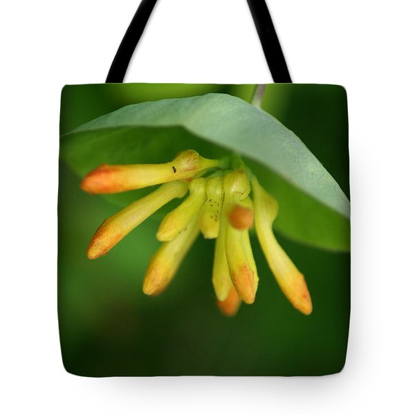 Tote Bag featuring the photograph Umbrella Plant by Ben Upham III