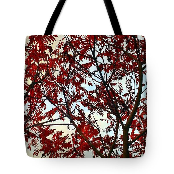 Under Fire Trees Tote Bag by Danielle R T Haney