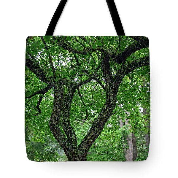 Tote Bag featuring the photograph Under The Shade Tree by Tikvah's Hope