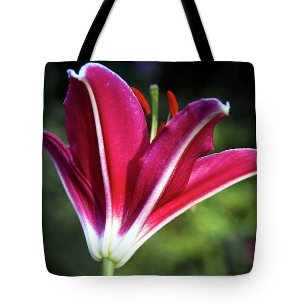 Underside Of Asiatic Tiger Lily 1653 H_2 Tote Bag