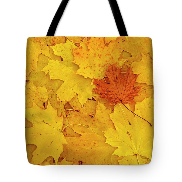 Tote Bag featuring the photograph Understory by Tony Beck