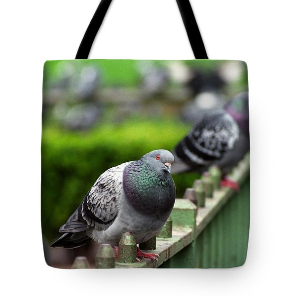 Union Square Pigeons Tote Bag by James B Toy