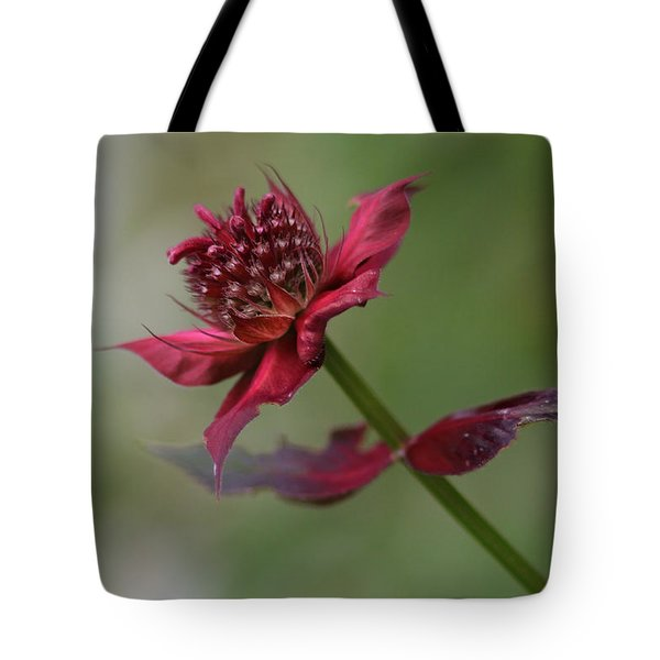 Tote Bag featuring the photograph Bee Balm by Ben Shields