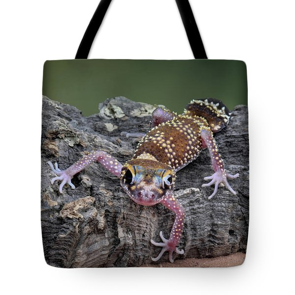Tote Bag featuring the photograph Up And Over - Gecko by Nikolyn McDonald