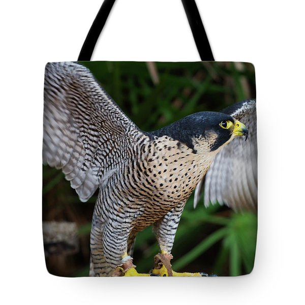 Tote Bag featuring the photograph Upset Peregrine by Arthur Dodd